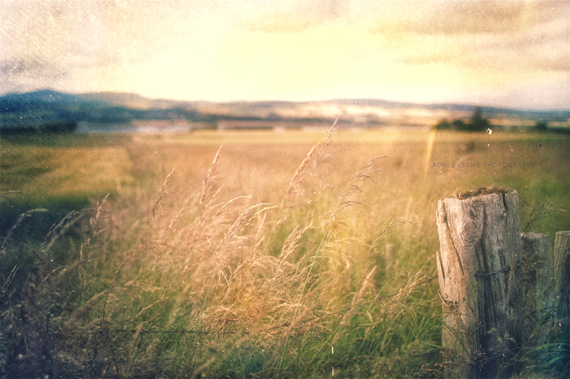 the-field-800px