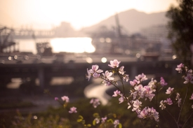 Our city flower