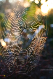 The web